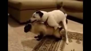 狗与猫交配繁殖