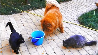 Все собаки и коты любят рыбу. All cats and dogs love fish. Одесса.