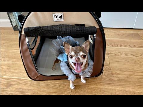 Тюрьма для собаки с комфортом. Дом-тент Triol. Обзор и реальный отзыв!