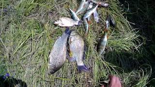 Рибалка в Тамбові. Ловимо карася, окуня, лина. Ставимо і перевіряємо раколовки.