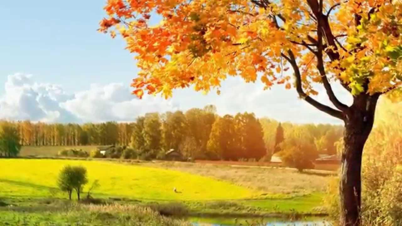 красавица осень картинка