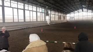 """Фестиваль """"Рабочая лошадь России"""" Советский тяжеловоз Ричард"""