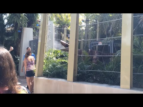 Jurassic World Raptor Encounter at Islands of Adventure
