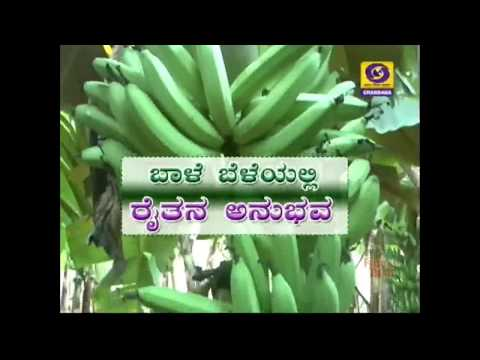 Profitable Farming of Banana Bale Krishi in Karnataka