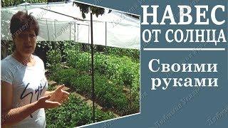 видео Как правильно поливать огород в жару