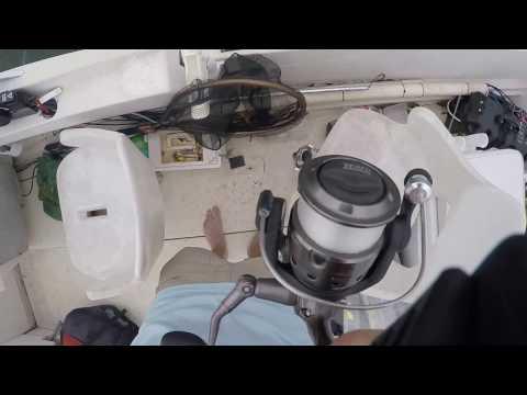 White Bass/ Hybrid Bass Fishing Techniques