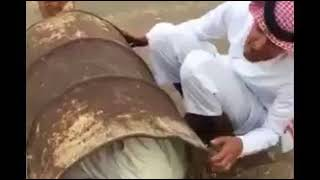 Saudi Funny  video