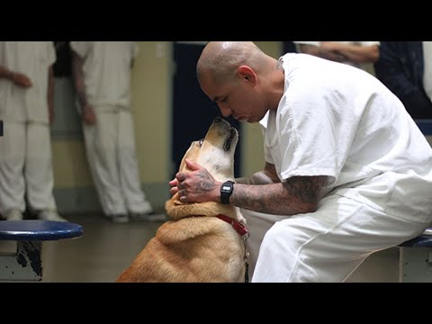 'They teach us and we teach them' inmates help dogs find a home