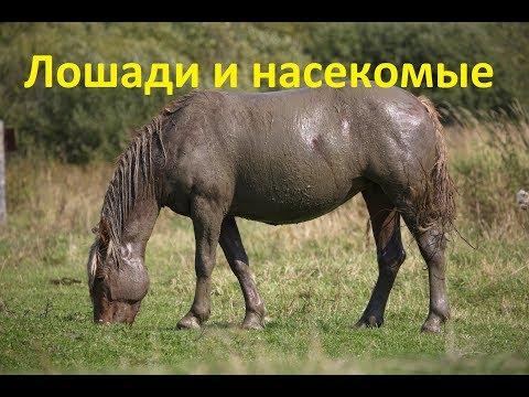 Вопрос: Лошади – парнокопытные животные или нет?