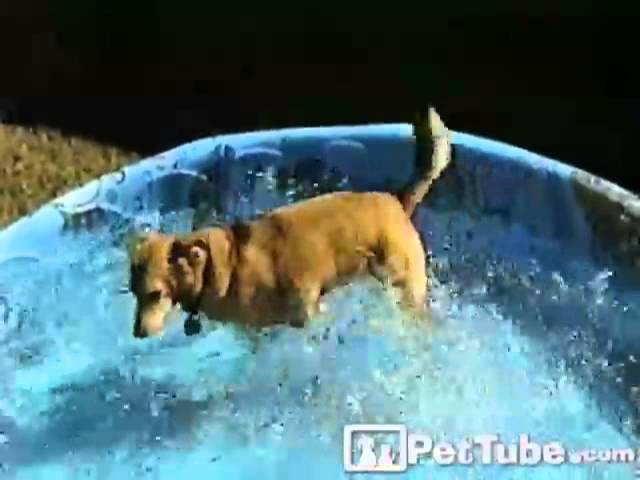 Dog Swimming in Shallow Water- PetTube