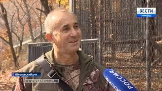 Самка леопарда из Украины приехала к жениху в Приморье
