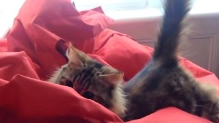 """Cats vs. Bean Bag Chairs Compilation"" 