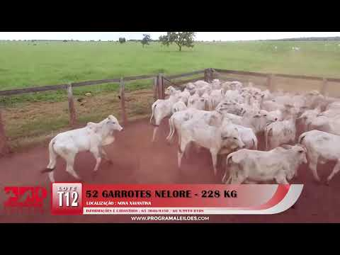 LOTE T12