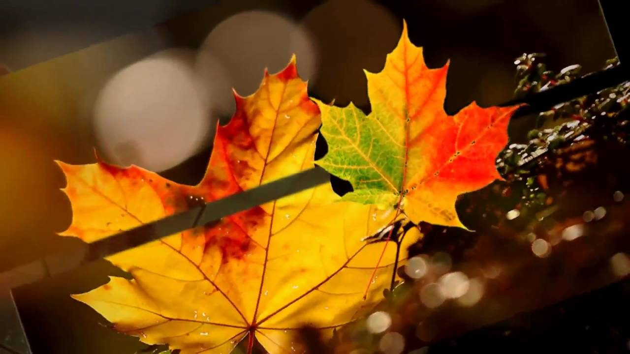 Fall Leaves Desktop Wallpaper Backgrounds Autumn Leaves Background Video Hd خلفيات اوراق الخريف