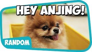 Hey Anjing ~ Wkwkwkwkkw