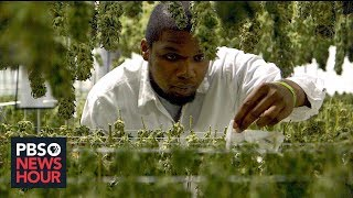 Marijuana legalization boom struggles to heal past scars of criminalization