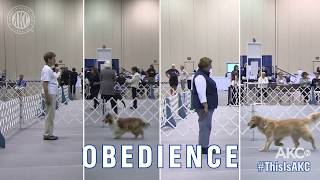 This is Obedience - AKC National Championship 2018