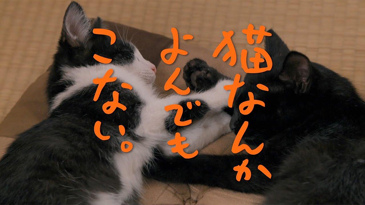 画像: 映画『猫なんかよんでもこない。』劇場予告編 youtu.be