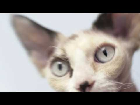 10 Reasons Why Cats Are Awesome