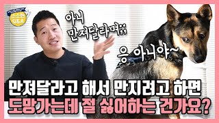 My dog runs away when he comes wanting to be petted. Does he not like me?|Kang Hyong Wook's Q&A