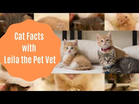 Cat Facts with Leila the Pet Vet - Youtube Kid Friendly Videos
