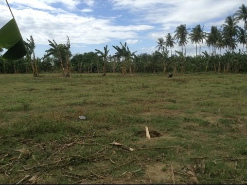 FOR SALE: Farm Lot in Balamban, Cebu