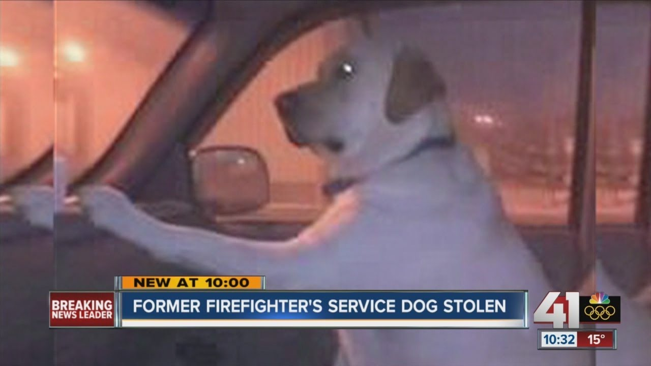 Former firefighter's stolen service dog found