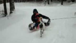 Sledding with Canaan Dogs I