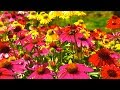 Peaceful music relaxing music instrumental music a summer s dream by tim janis mp3