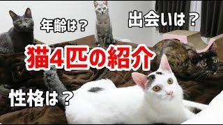 登録者様も5000人を突破したので…改めて我が家の猫4匹の紹介動画を作り...