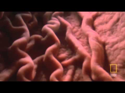 National Geographic - Inside the Living Body (Sample)