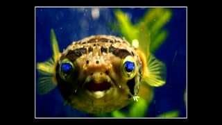Эти забавные аквариумные рыбки)(Купить аквариум http://okun.com.ua Интернет-магазин аквариумистики okun.com.ua - это магазин для любителей аквариумных..., 2012-04-13T10:18:45.000Z)
