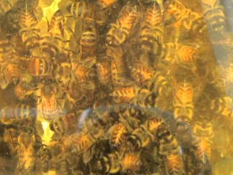 Finestra di osservazione sul nido di una warr youtube - Nido api finestra ...