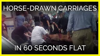 Horse-Drawn Carriages in 60 Seconds Flat