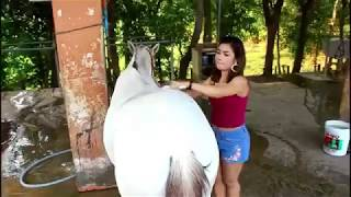 Amazing My Sister and A Horse in Horse Park, How to Wash and Care a Horse. PAT 2