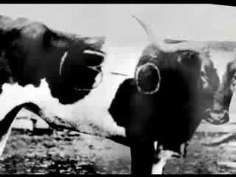 Bevo: History Of A Steer