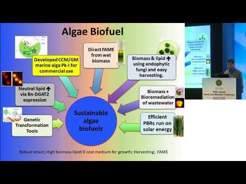 ILSI RF – SABC2017: Genetic Engineering of Algae for Higher Biofuel Value and…( Dr. Shashi Kumar)