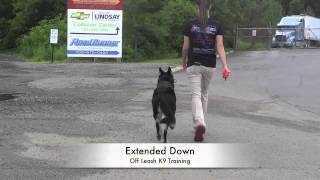 German Shepherd Before/after Video! German Shepherd Electronic Collar Training