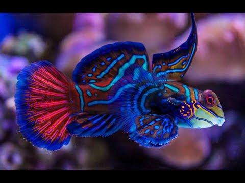 2 Minutes of Beautiful Coral Reef Fish, Relaxing Ocean ...