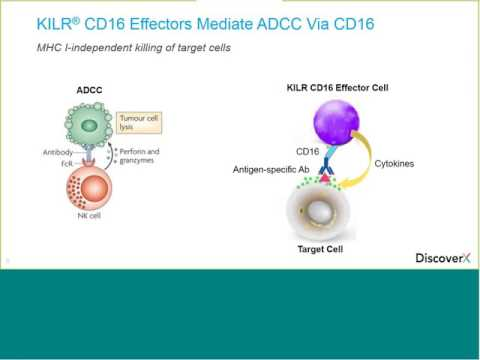 Driving Robust ADCC and T Cell Redirection with KILR CD16 Effector Cells