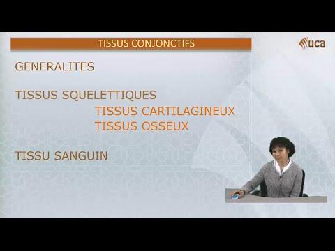 Tissus Conjonctifs