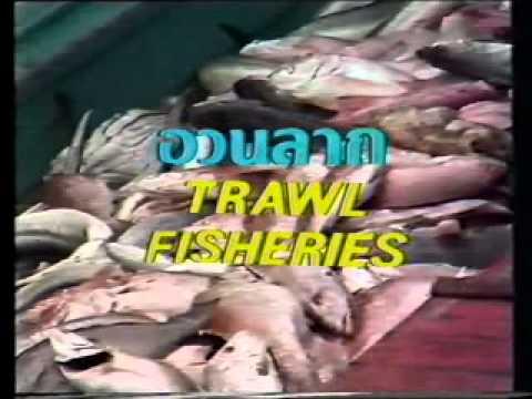 Trawl Fisheries (อวนลาก)
