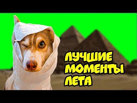 ХАСКИ БУБЛИК ЛУЧШИЕ МОМЕНТЫ ЛЕТА (Mister Booble) Говорящая собака