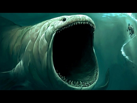 What is bigger than a megalodon? - YouTube