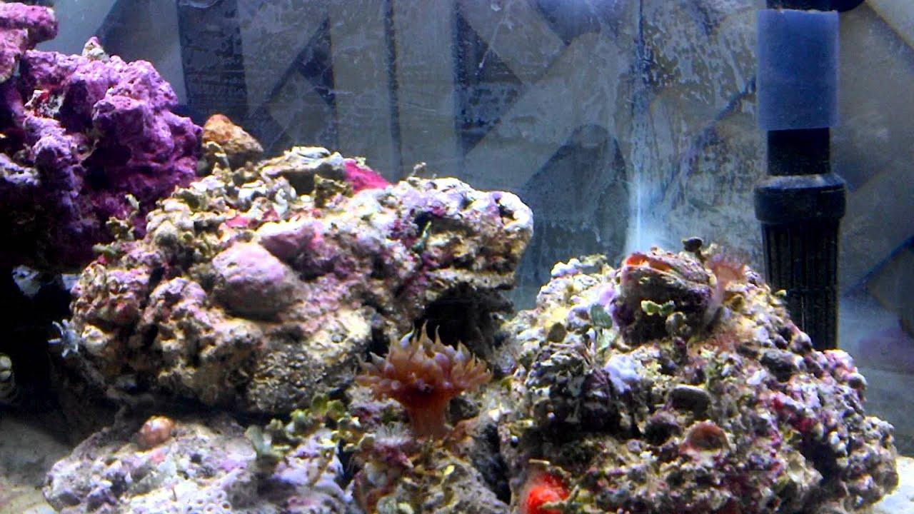 Exotic Coffee Table Aquarium