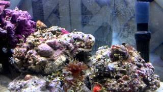 Exotic Coffee Table (aquarium)
