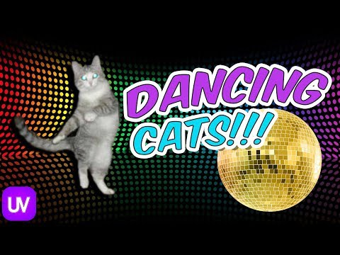 Funny Cats Dancing To Music - 🔥 CAT LOVERS ONLY!!! 🔥 Dancing Cat Compilation