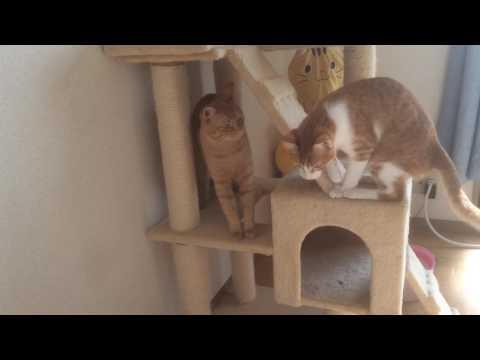 攻めてくる猫『保護猫るる らら物語』
