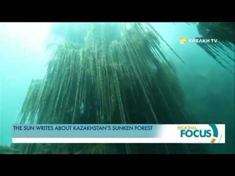 FOREIGN MEDIA POSTS ABOUT KAZAKHSTAN'S SUNKEN FOREST