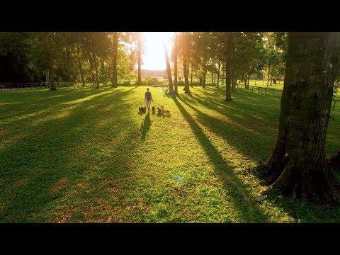 Sunrise Austrailian Labradoodles